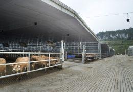 Aplikasi Solartuff - Proyek Solartuff Greenfield Milk Farm Wlingi Blitar