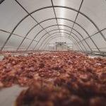 INFOGRAFIS: Produk Hortikultura yang Dapat Dikeringkan dengan Solar Dryer Dome