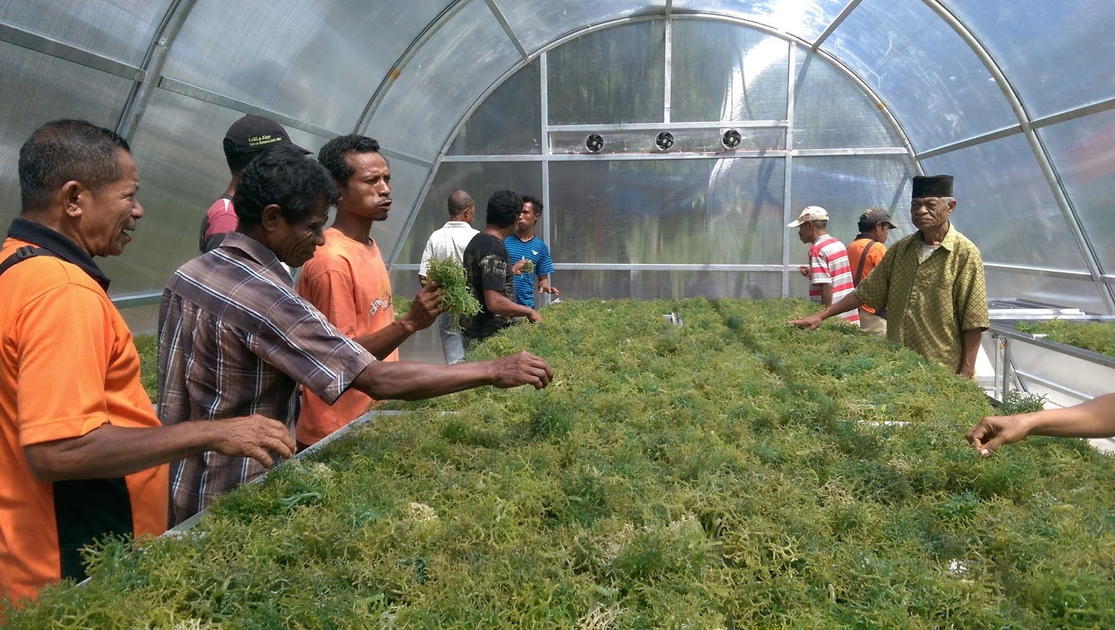 Solar Dryer Dome - Pengeringan rumput laut