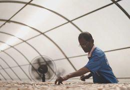 cara pengawetan bahan pangan dengan solar dryer dome