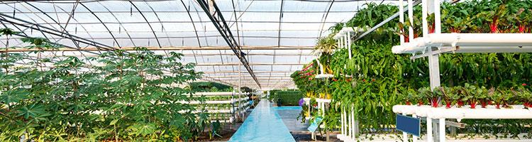 greenhouse menggunakan polycarbonate twinlite solartuff