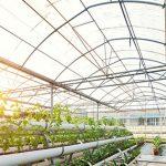9 Keuntungan Menggunakan Polycarbonate untuk Greenhouse