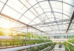 keuntungan menggunakan polycarbonate untuk greenhouse