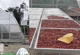 alat pengering kopi matahari polycarbonate solar dryer dome sdd