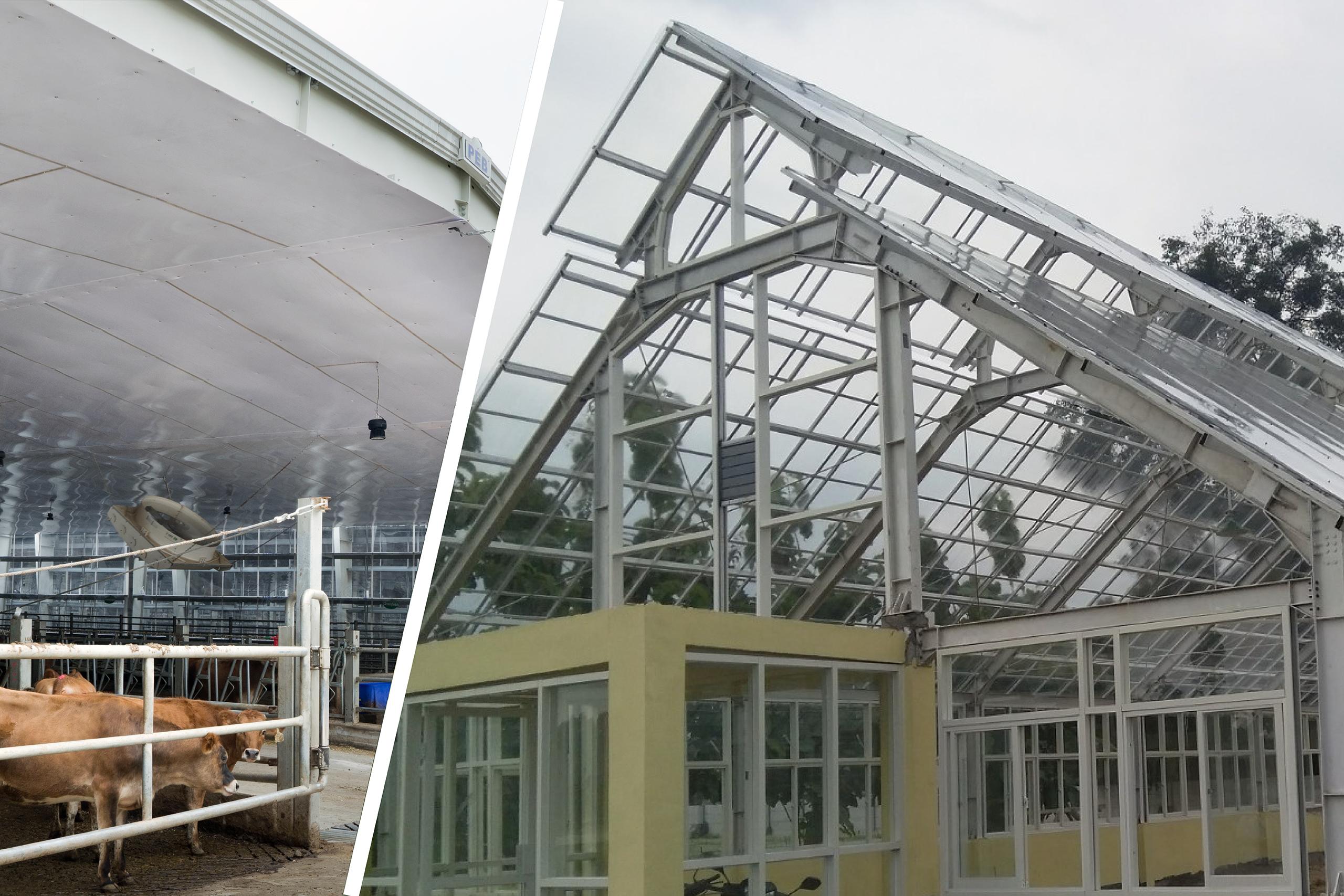 solarflat solartuff solid pada greenhouse dan plafon peternakan sapi greenfields
